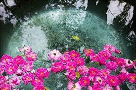 خواص و فواید گلاب طب سما